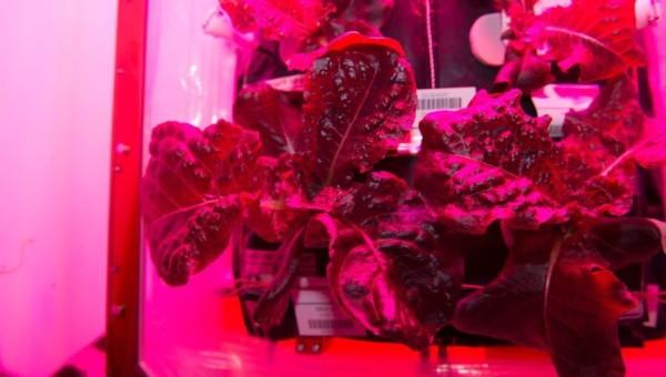Первые овощи в космосе