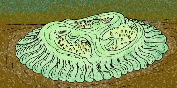Трибрахидиум вымерший организм