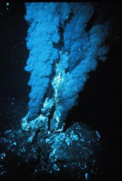 Первый организм на Земле