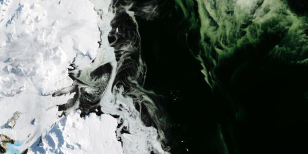 Странный зеленый лед в море Росс в Антарктике и космические сады на урине