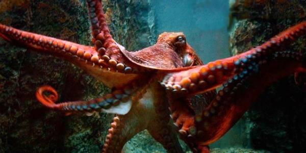 Новые исследования доказали, что осьминоги попали к нам из космоса