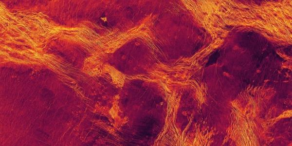 Паковый лед раскроет все секреты Венеры - тектоническая деформация или рассказ о жизни экзопланет